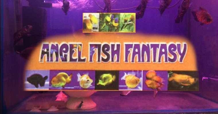 Angel Fish Fantasy